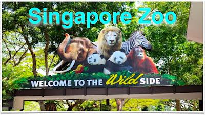Singapore Zoo - Trips Wheel Pvt Ltd