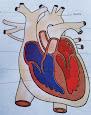हृदय का चित्र