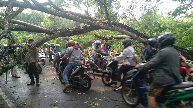 Pohon Tumbang Di Jalan Wonosari - Jogja, Situasi Terkendali