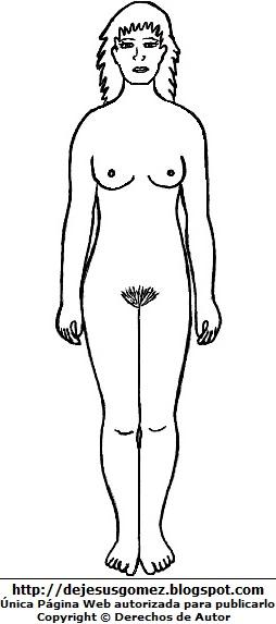 Dibujo del cuerpo humano de la mujer para colorear, pintar e imprimir (Vista anterior o Vista Ventral o delante). Dibujo del cuerpo humano de Jesus Gómez