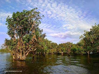 littlerindang's blog: Potensi Hutan Mangrove di Indonesia