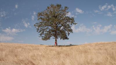 niebo, żółta trawa, Celtowie, religie, drzewa, Iran, Germanie, jemioła