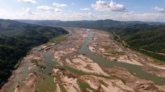 Sốc: Diện tích rừng ở Việt Nam bị mất trong vòng 20 năm qua
