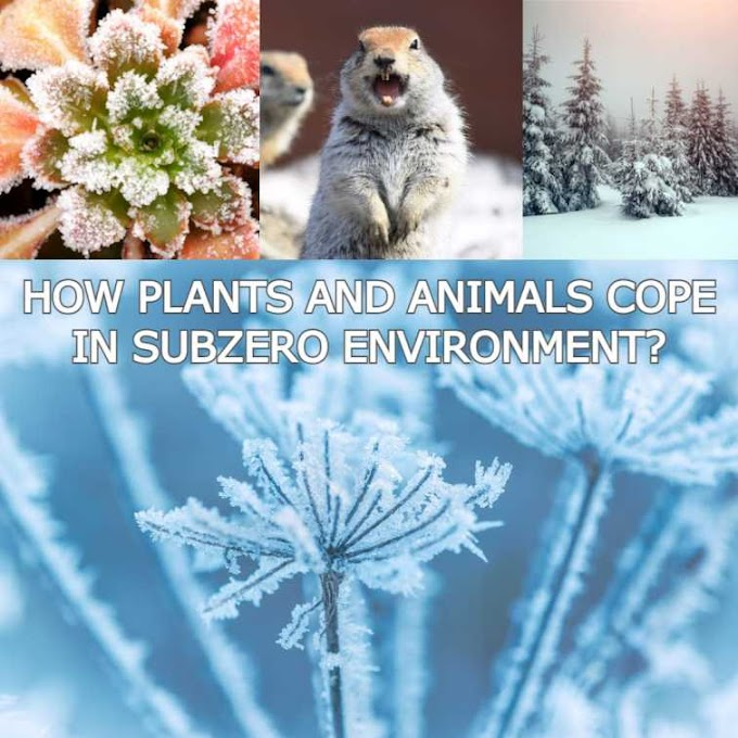 How plants and animals can survive in subzero environment...... ?