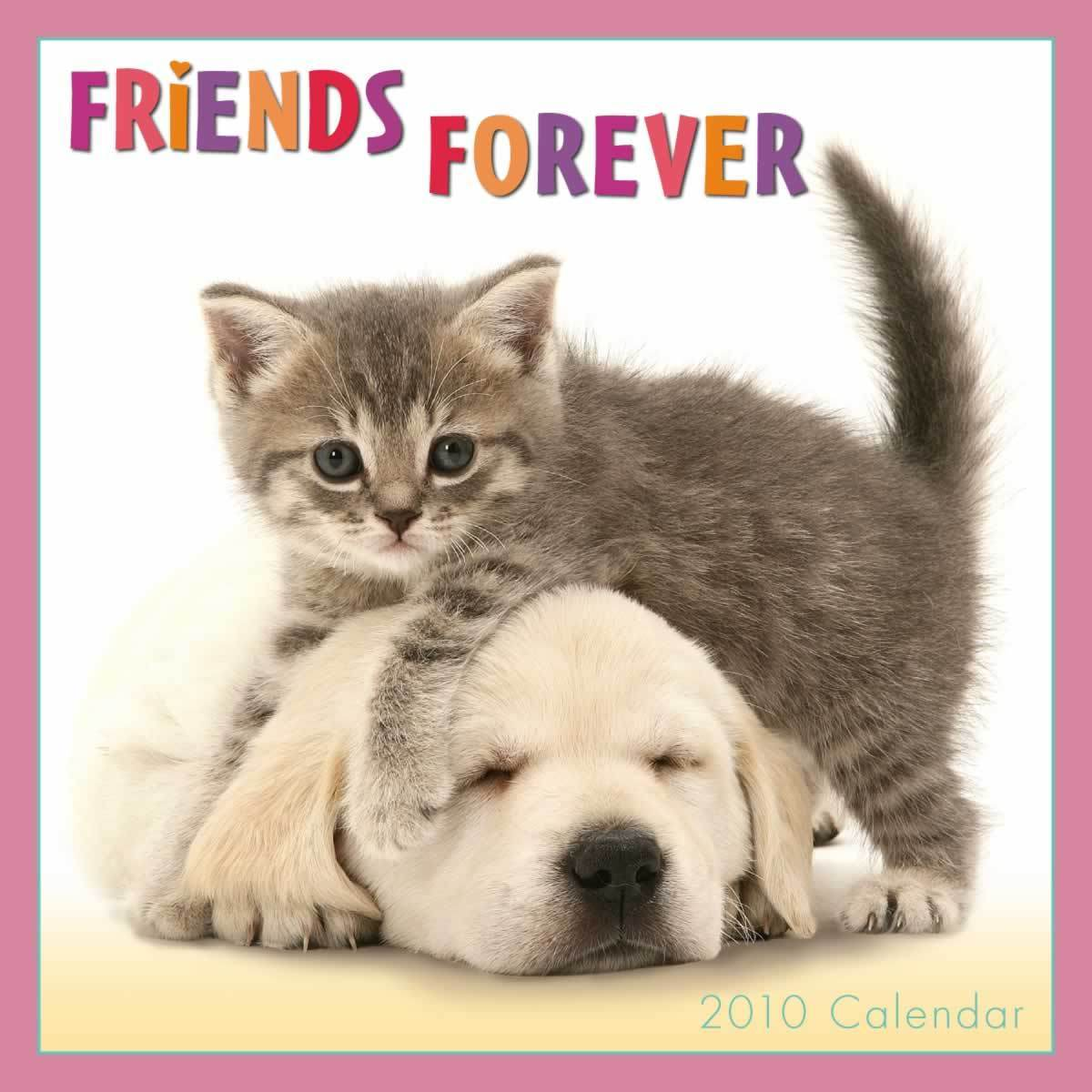 Bff Quotes Wallpapers Quotes About Best Friends Forever Quotesgram