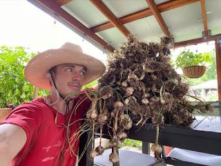 Urban Farmer with Pile of Garlic