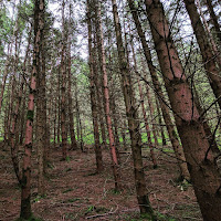 Ireland Images: forest in County Wicklow