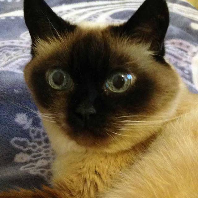 кошка Муся, 18 лет