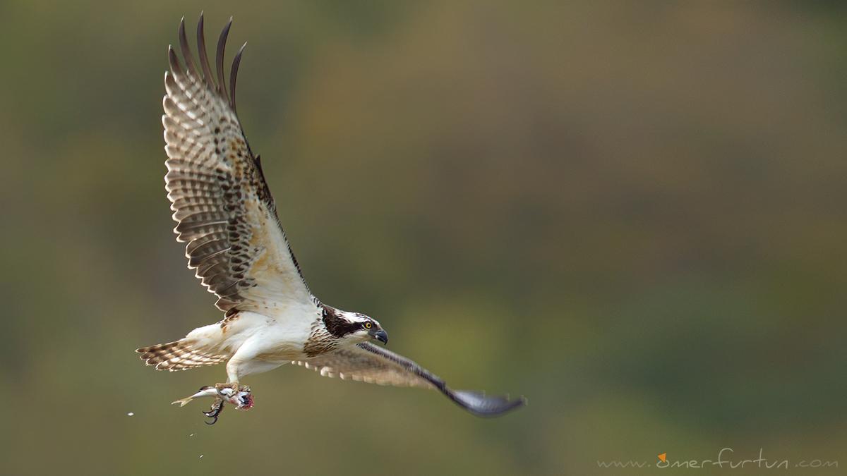 Rüyada Balık Kuş Ve Aslan Avcısı Görmek