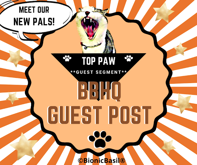 BBHQ Guest Post Banner ©BionicBasil®