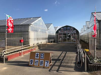 いちご狩り園「越谷いちごタウン」が1月3日オープン!