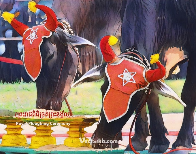 royal ploughing ceremony cambodia 2021 - royal ploughing ceremony 2021 cambodia free psd file