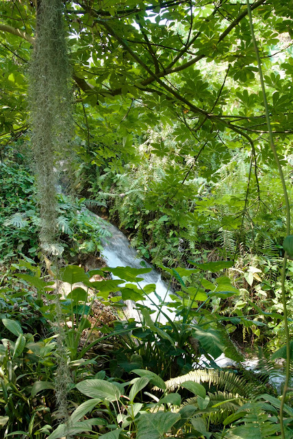 waterfall rainforrest dome