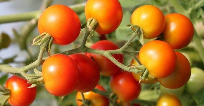 Custom harvesting business plan