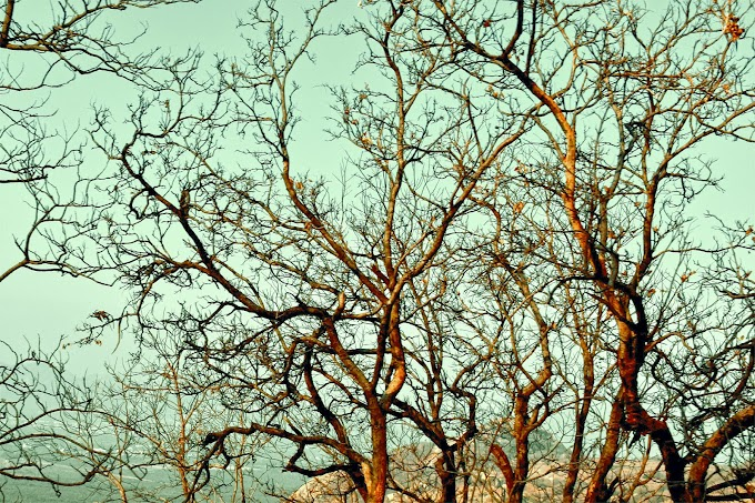 Latest Dry Tree Images Collection