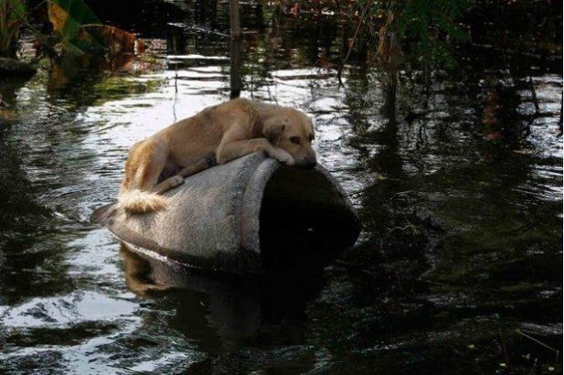 Каждого человека, бросившего животное в урагане, ожидает наказание от правительства!