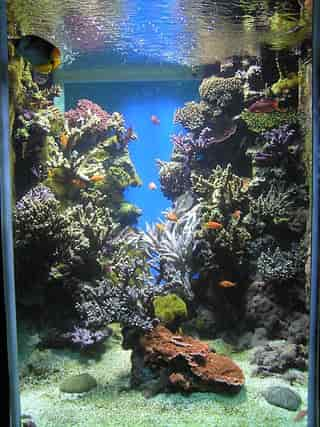 How to setup a saltwater tank