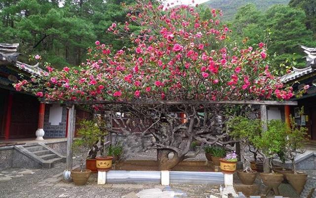 วัดอวี้เฟิง (Yufeng Temple: 玉峰寺)