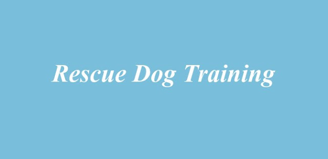 Rescue Dog Training