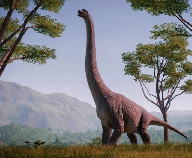 "Nama Alamosaurus berasal dari Ojo Alamo, adalah nama lama untuk formasi geologi di mana Alamosaurus ditemukan (bagian dari Formasi Ojo Alamo sejak itu telah dipindahkan ke Kirtland Shale). Istilah alamo sendiri adalah kata Spanyol yang berarti ""poplar"" dan digunakan untuk subspesies lokal pohon kapas. Istilah saurus berasal dari saura (σαυρα), bahasa Yunani untuk ""kadal"" dan merupakan akhiran yang paling umum digunakan dalam nama dinosaurus. Ada satu spesies (A. sanjuanensis), yang dinamai San Juan County, New Mexico, di mana sisa-sisa pertama ditemukan. Baik genus dan spesies diberi nama oleh paleontolog Smithsonian, Charles. W. Gilmore pada tahun 1922."