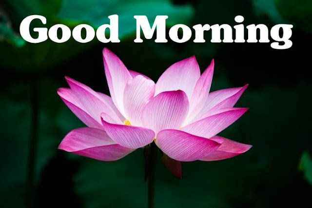 good morning nature pictures