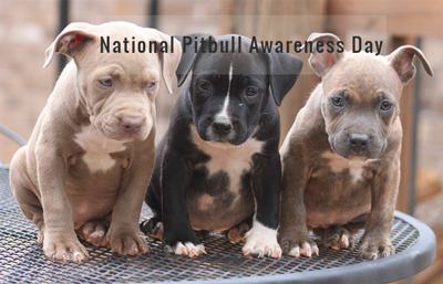 National Pit Bull Awareness Day Wishes Pics