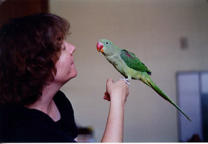 All About Birds: Beautiful and Excellent Pets- Alexandrine