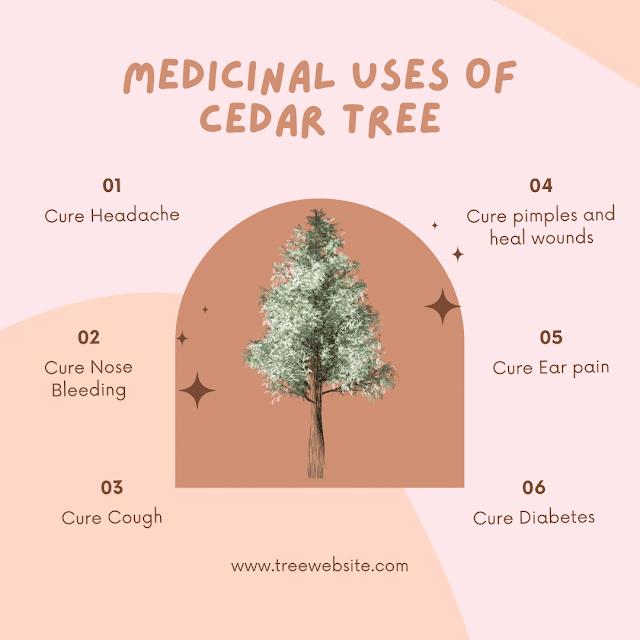 medicinal uses of cedar tree