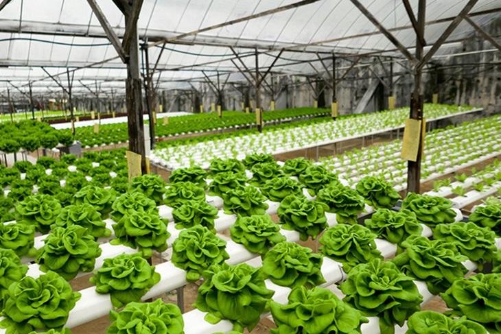 tanaman pertanian organik