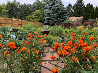 Stone pathway to fire pit lined with orange marigolds
