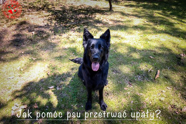 http://www.zonaczarnywilk.pl/2018/08/jak-pomoc-psu-przetrwac-upay.html