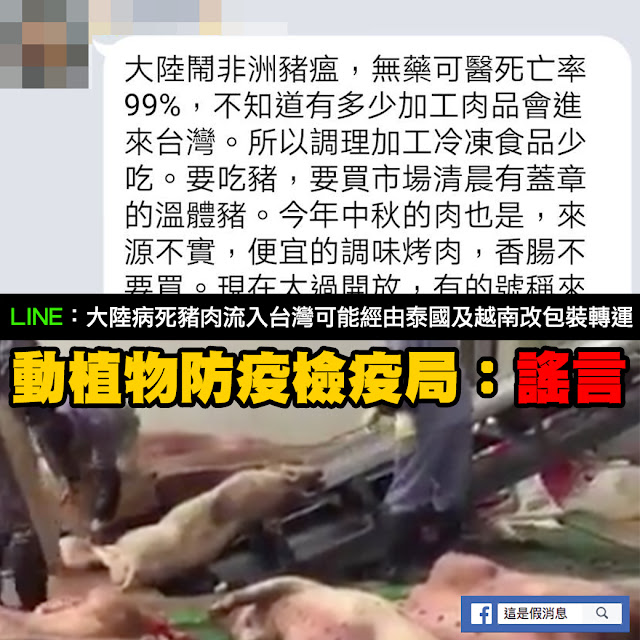 中國 大陸 非洲 豬瘟 泰國 影片 謠言