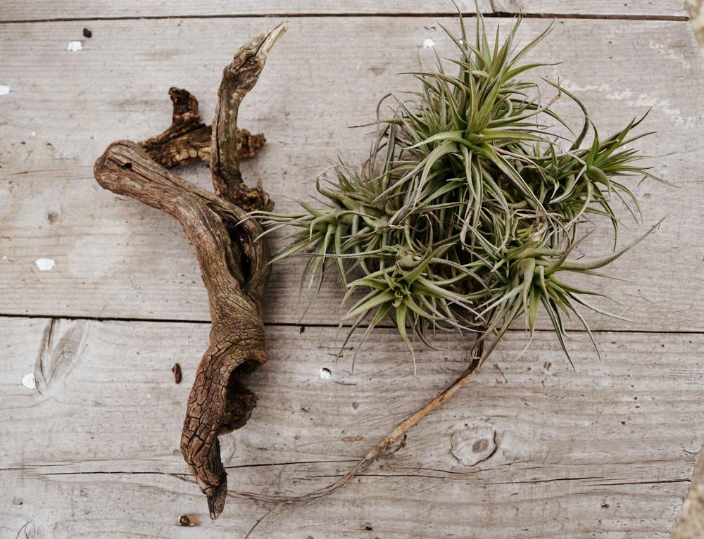 DIY, crea tu propio terrario con plantas aéreas y bilbergias, yo te enseñaré como hacerlo paso a paso