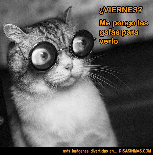 VIERNES gato con gafas