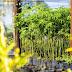 Águas Guariroba celebra Dia da Árvore com programação ambiental neste fim de semana