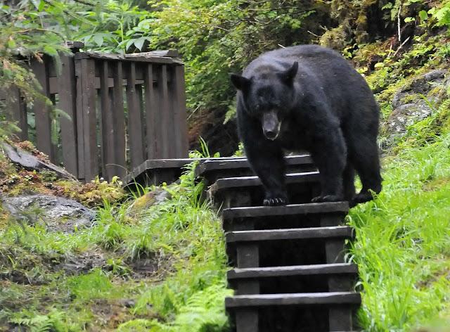 Anan Wildlife in Wrangell, Alaska