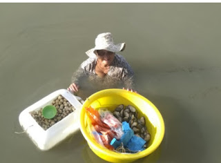 85 year-old- woman- spends hour in seawater to collect sea foods to sell and save her sick daughter