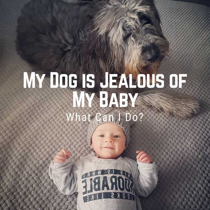 My Dog is Jealous of My Baby, What Can I Do