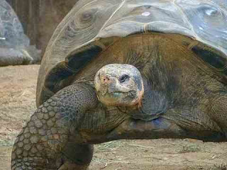 सपने में कछुआ देखना sapne mein tortoise dekhna