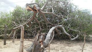 Chuva acompanhada de vento provoca danos na zona rural de São Vicente do Seridó