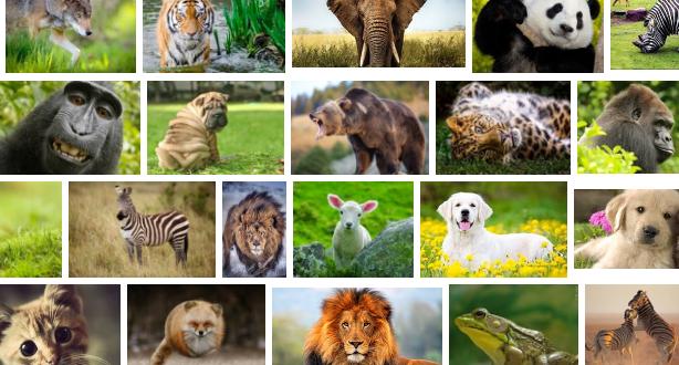 تفسير حلم رؤية الحيوانات في المنام لابن سيرين