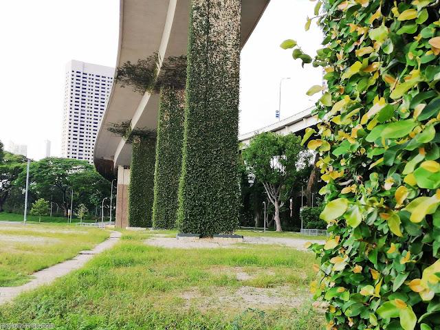 dây leo kỳ diệu phủ xanh kết cấu cột bê tông ở singapore