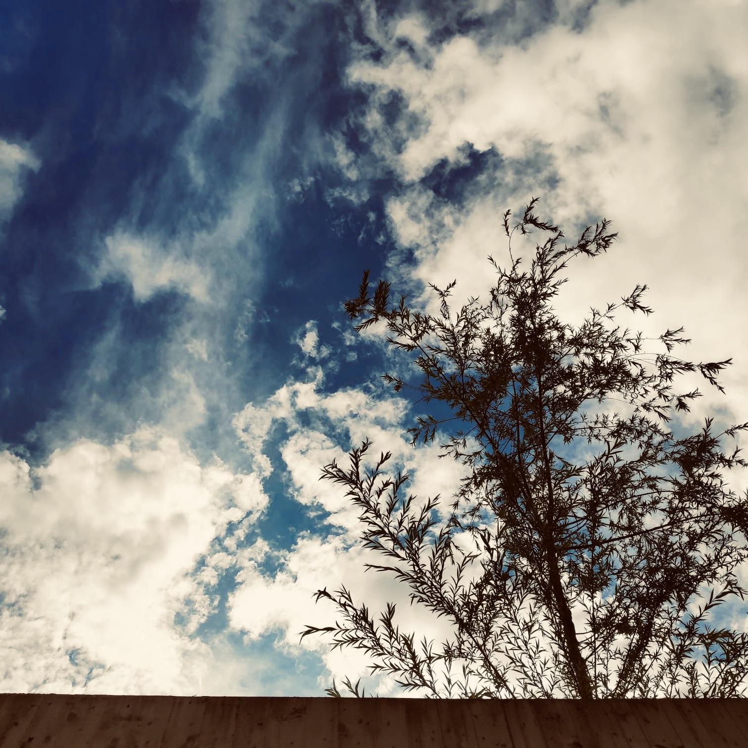 Tree.Wall.Sky.Done. Photography.