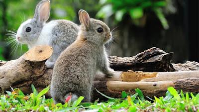 Download PPT As Timid As Rabbit | Bahasa Inggris Kelas VIII (Revisi)