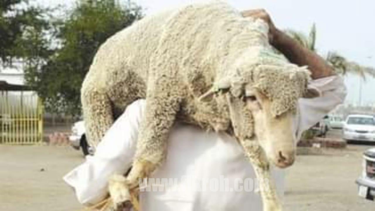 Syarat Orang Yang Menyembelih Hewan Kurban