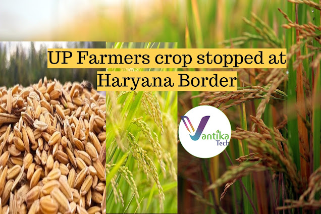 UP farmers paddy