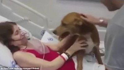 Doctors grant terminally ill woman's dying wish to be reunited with her dog for the last time
