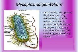 Transmission of M. genitalium occurs through direct mucosal contact