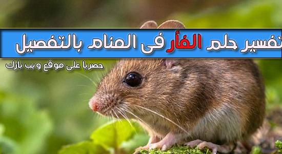 الفأر   تفسر حلم الفأر   تفسير رؤية الفأر فى المنام