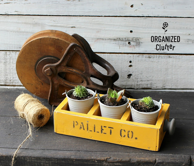Stenciled Drawer Succulent Planter